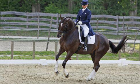 Hinging rider – mozgásfejlesztő tréning lovasoknak