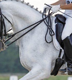 Hinging rider- Ülésjavító program
